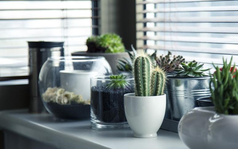 Boîtes de jardin et boîtes de support – rangement pratique pour le jardin